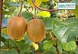 selbstfruchtende Kiwi Pflanze, (Actinidia deliciosa), Sorte: Jenny, kräftige...
