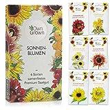 Sonnenblumen Samen Set: Premium Sonnenblumen Saatgut mit 6 Sorten schöner...