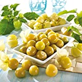 Kiepenkerl Ananaskirsche 'Goldmurmel' | Naschobst | fruchtiges Aroma | 1 Packung...