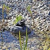 CLGarden Set Frosch Wasserspeier NSP10 Teichfigur Solarbrunnen mit Solar Pumpe für...