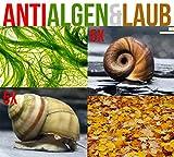 Anti Algen & Laub Reinigungstruppe für den Gartenteich - LEBENDES Teichpflege Team +...