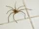 Hausmittel gegen Spinnen