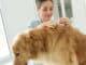 Zecke bei Hund und Katze