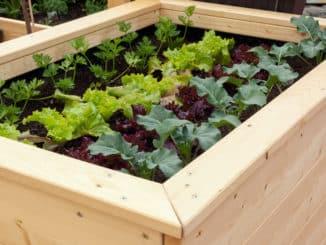 Hochbeet mit Salat