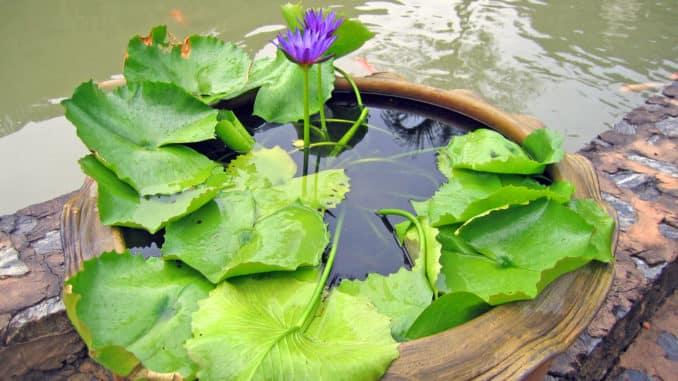 Mini-Teich auf der Terrasse