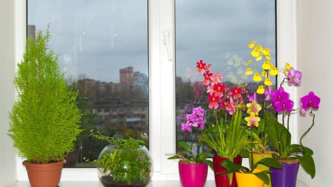 Blumentöpfe auf dem Fenster