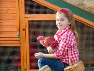 Kleiner Hühnerstall für Zuhause