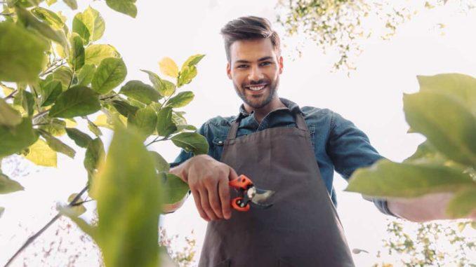 Gärtner mit Gartenschere
