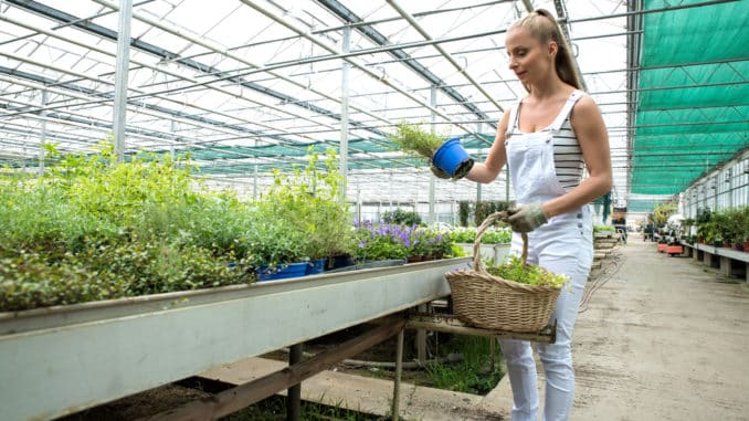 Richtiger Zeitpunkt zur Pflanzung