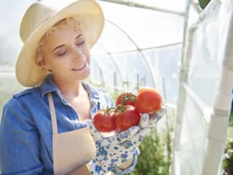 Wann tomaten ins Gewächshaus