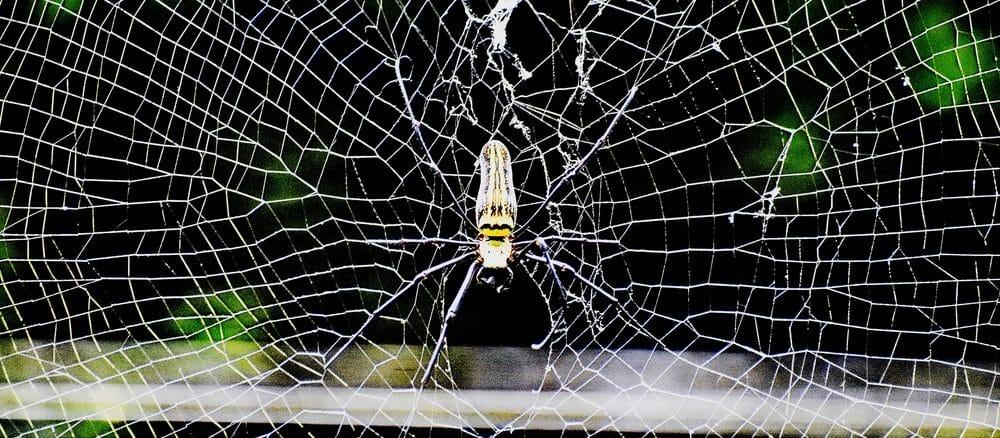 So schützen Sie Balkon und Terrasse vor Ungeziefer