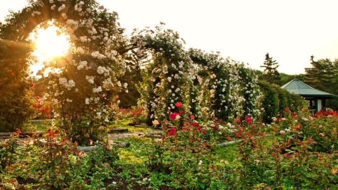 Rosenbögen