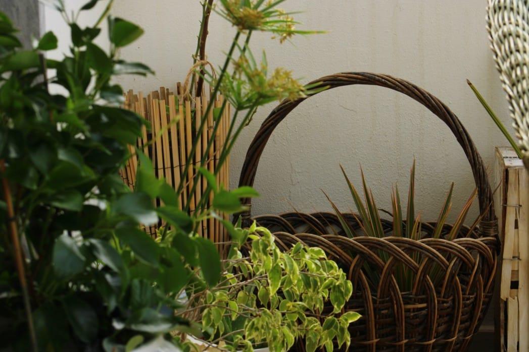 Pflanzen als Dekoration