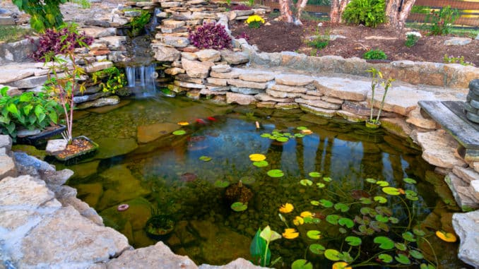 Sauberer Gartenteich