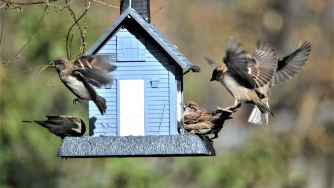 selbst gebautes Vogelhaus
