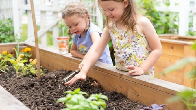 Kinder pflegen ein Hochbeet