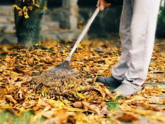 Herbstlaub wird mit dem Rechen aufgekehrt